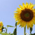 夏 熱中症予防